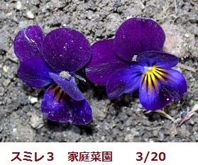 f:id:mikawakinta63:20120320102122j:image:left