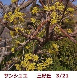 f:id:mikawakinta63:20120321094554j:image:right
