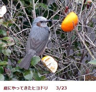 f:id:mikawakinta63:20120323070152j:image:right