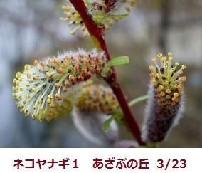 f:id:mikawakinta63:20120323094240j:image:left