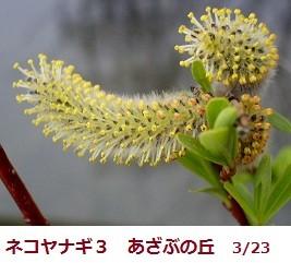 f:id:mikawakinta63:20120323094449j:image
