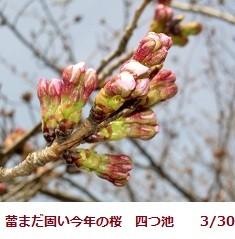 f:id:mikawakinta63:20120330101733j:image:right