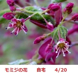 f:id:mikawakinta63:20120420083530j:image:left
