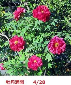 f:id:mikawakinta63:20120428065351j:image:left