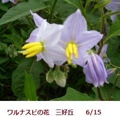 f:id:mikawakinta63:20120615092238j:image:right
