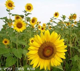 f:id:mikawakinta63:20120810064509j:image:left