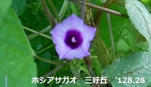 f:id:mikawakinta63:20120822070651j:image:right