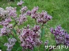 f:id:mikawakinta63:20121005122715j:image