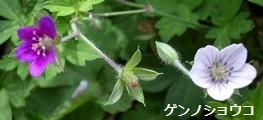 f:id:mikawakinta63:20121005141024j:image:left