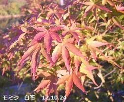 f:id:mikawakinta63:20121024074132j:image:left