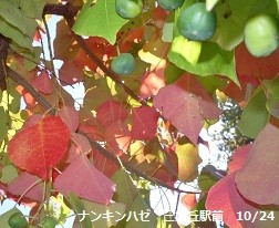f:id:mikawakinta63:20121024120951j:image:right
