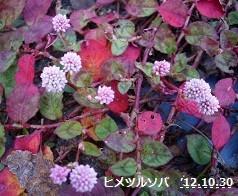 f:id:mikawakinta63:20121030132357j:image:right