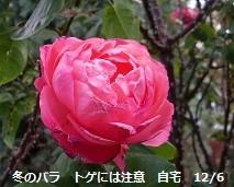 f:id:mikawakinta63:20121206123606j:image:left