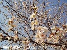 f:id:mikawakinta63:20121208102402j:image:left