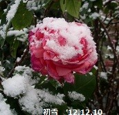 f:id:mikawakinta63:20121210081045j:image:right