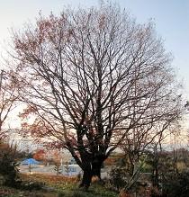 f:id:mikawakinta63:20121222161354j:image:right