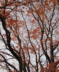 f:id:mikawakinta63:20121222161447j:image:left