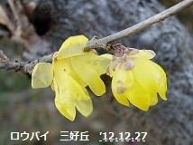 f:id:mikawakinta63:20121227092327j:image