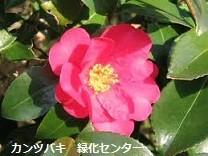 f:id:mikawakinta63:20130109200113j:image:left
