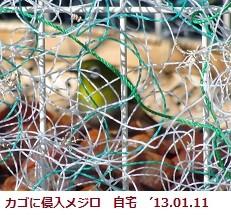 f:id:mikawakinta63:20130111101424j:image:left