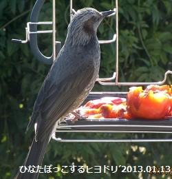 f:id:mikawakinta63:20130111124425j:image:right