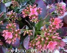 f:id:mikawakinta63:20130116102821j:image:left
