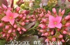 f:id:mikawakinta63:20130116103042j:image:right