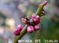 f:id:mikawakinta63:20130120103959j:image:left