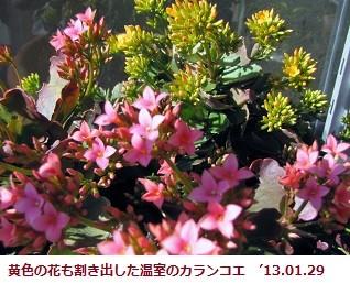 f:id:mikawakinta63:20130129122713j:image:left