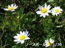 f:id:mikawakinta63:20130130125606j:image:left