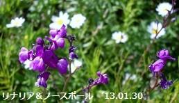 f:id:mikawakinta63:20130130125631j:image:right