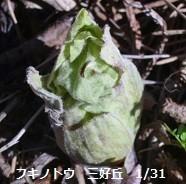 f:id:mikawakinta63:20130131094556j:image:left