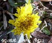 f:id:mikawakinta63:20130131095036j:image:right