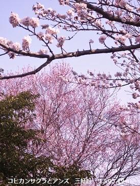 f:id:mikawakinta63:20130319093820j:image