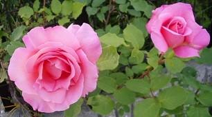 f:id:mikawakinta63:20130508074732j:image:left