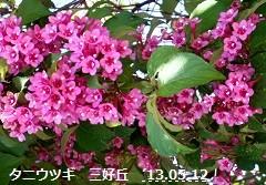 f:id:mikawakinta63:20130511232317j:image:left