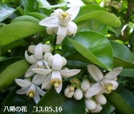f:id:mikawakinta63:20130515234847j:image:left