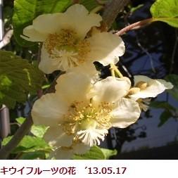 f:id:mikawakinta63:20130516210212j:image:left
