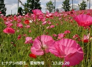 f:id:mikawakinta63:20130520040533j:image:left