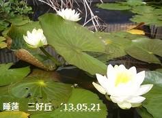 f:id:mikawakinta63:20130520220907j:image:right
