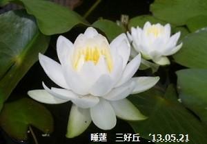 f:id:mikawakinta63:20130520220921j:image:left