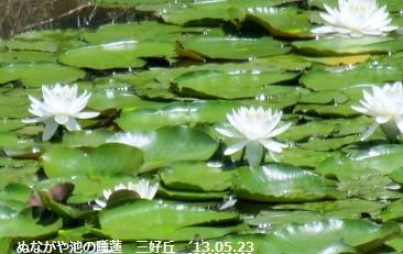 f:id:mikawakinta63:20130523104910j:image:right
