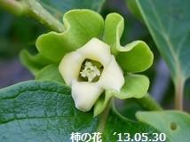 f:id:mikawakinta63:20130527215723j:image:right