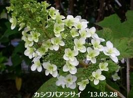 f:id:mikawakinta63:20130528050551j:image:left