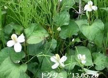 f:id:mikawakinta63:20130528050842j:image:right