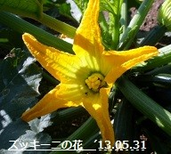 f:id:mikawakinta63:20130530211347j:image:left