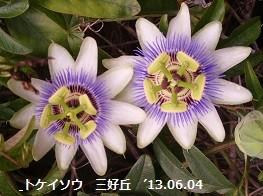 f:id:mikawakinta63:20130602001101j:image:left