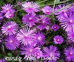 f:id:mikawakinta63:20130602001759j:image:right
