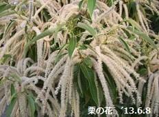 f:id:mikawakinta63:20130608072122j:image:left