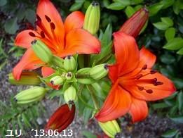 f:id:mikawakinta63:20130609003511j:image:right